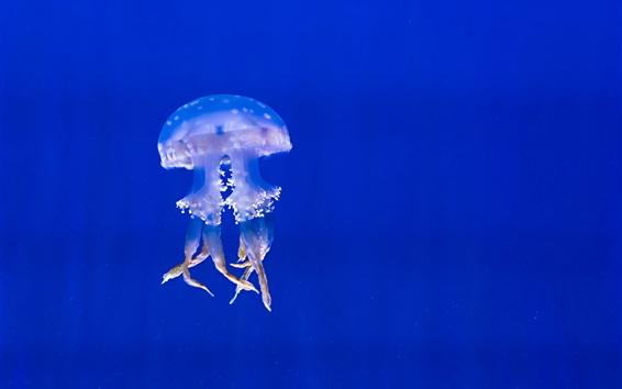 Fond d'écran Méduses au sous-marin, tentacules, mer bleue