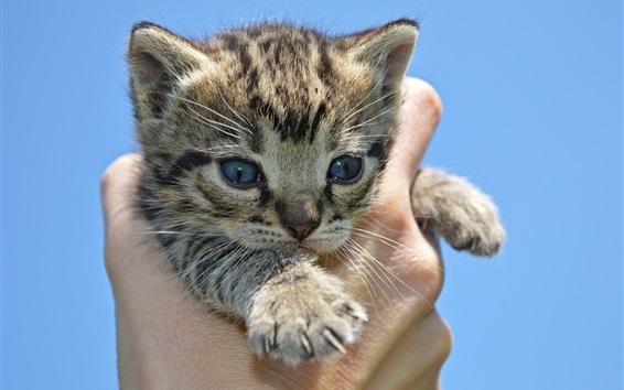 Wallpaper Kitten in hand