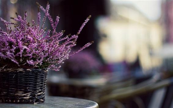 Wallpaper Lavender flowers, basket, blurry background
