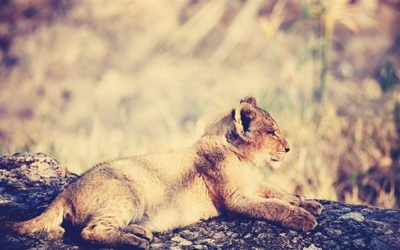 Обои Отдых для львенок