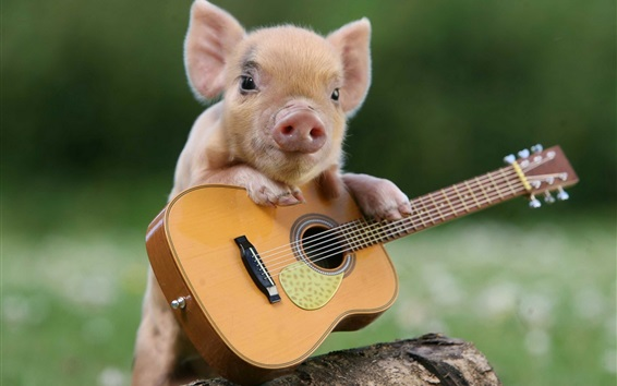 Wallpaper Little pig and guitar