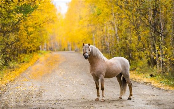 Wallpaper Lonely horse, road, trees, autumn