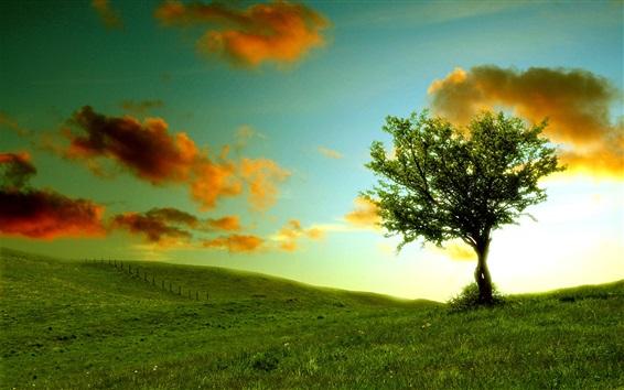 Обои Одинокое дерево, трава, облака, солнце