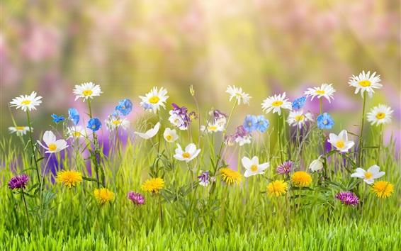 Fond d'écran De nombreuses sortes de fleurs, couleurs colorées, herbe