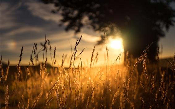 배경 화면 아침, 잔디, 햇빛, 일출