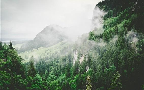 Papéis de Parede Montanhas, árvores, declive, nevoeiro, manhã