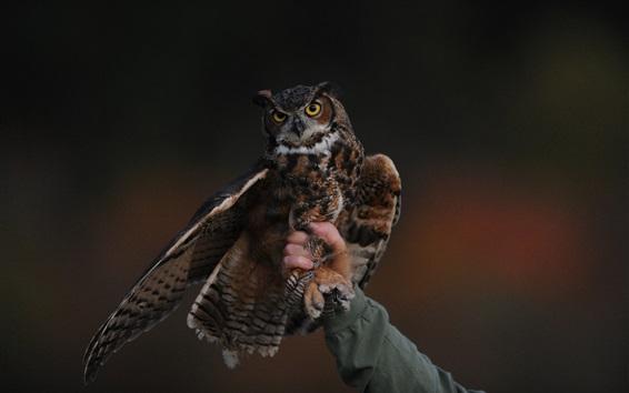 Wallpaper Owl, hand