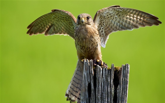 Wallpaper Owl, wings, stump
