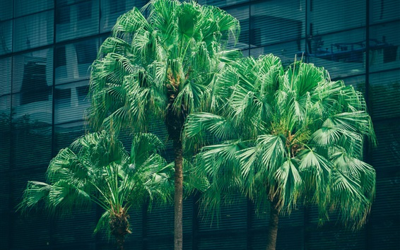 Wallpaper Palm trees, green leaves, city