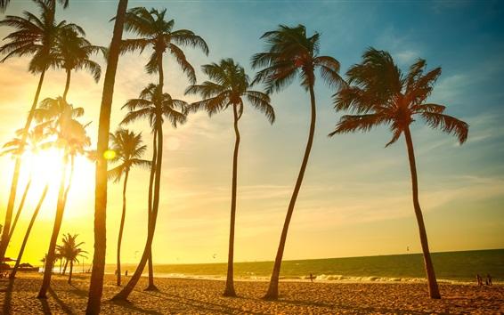 Wallpaper Palm trees, sea, beach, sunset