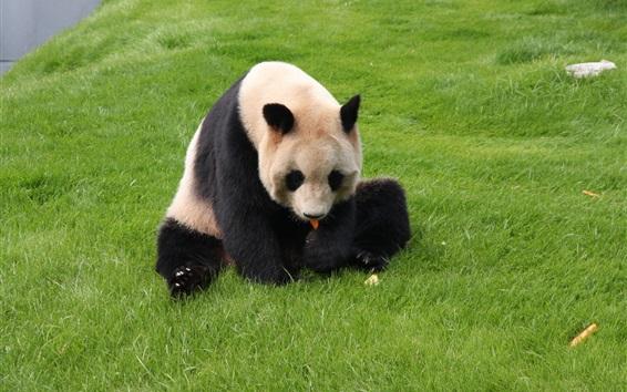 Papéis de Parede Panda, Descanso, capim