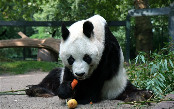 Wallpaper Panda sit to eating food
