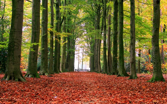 Park, trees, autumn, alley, ground, red leaves Wallpaper Preview