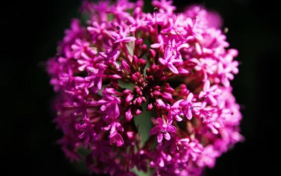 Обои Розовые цветы макросъемки, черный фон