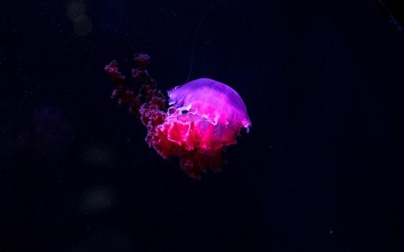 Wallpaper Pink jellyfish, underwater