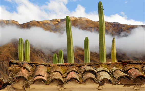 Wallpaper Plants cacti, rooftops, clouds, fog