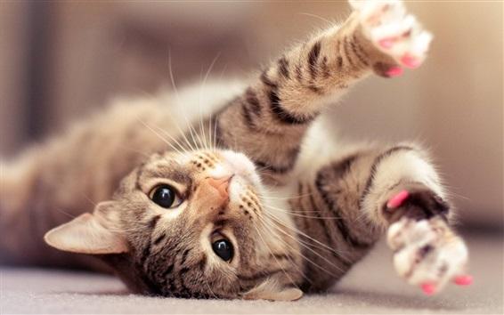 壁紙 遊び心のある猫を見て