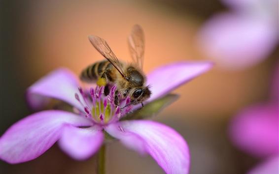 Wallpaper Purple flower, bee, bokeh