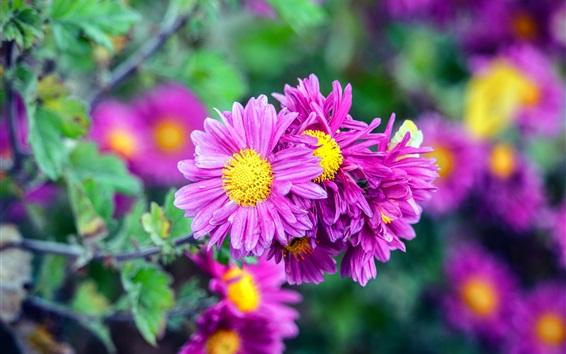 Papéis de Parede Flores roxas flores, primavera