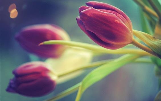 Wallpaper Purple tulips, blurry