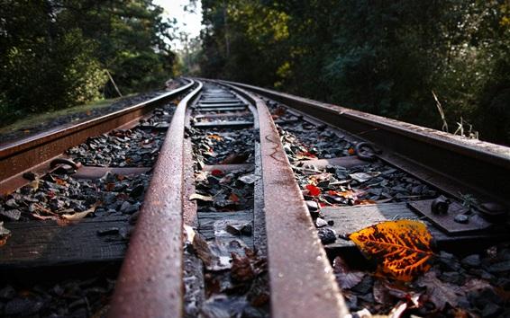 Обои Железная дорога, листья, камни, размытый фон
