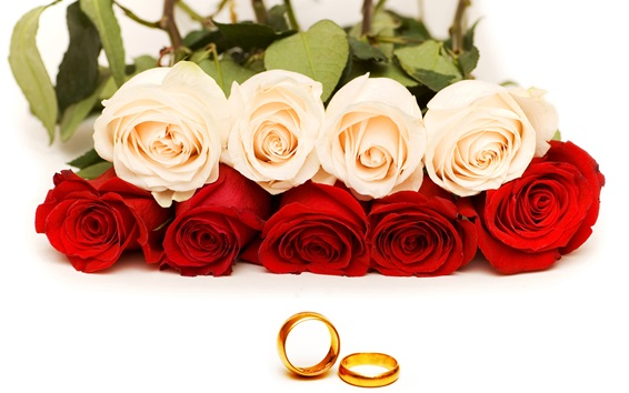 Red and orange roses, gold rings Wallpaper Preview