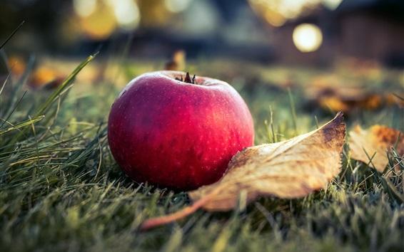 Wallpaper Red apple, grass, leaf