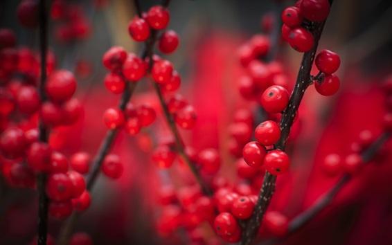 Papéis de Parede Bagas vermelhas, frutas, galhos