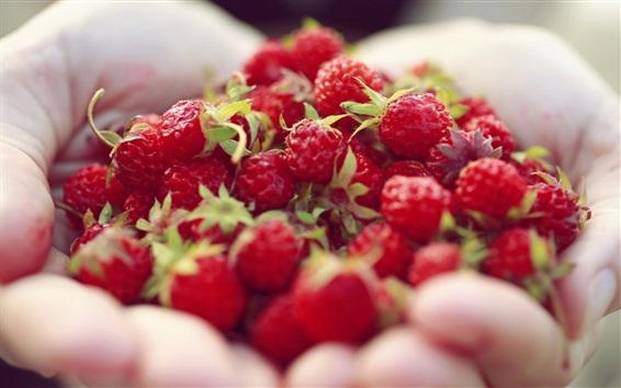 Wallpaper Red berries in hands