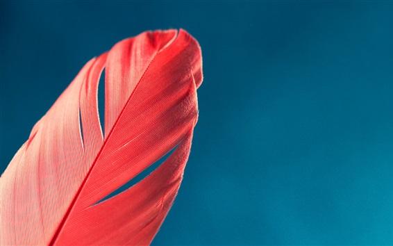 Обои Красное перо, голубое небо