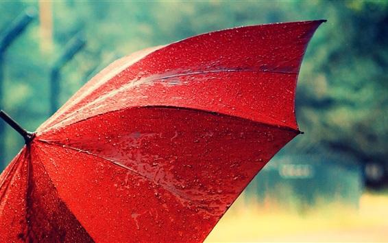 Fond d'écran Parapluie rouge, après la pluie, gouttes d'eau