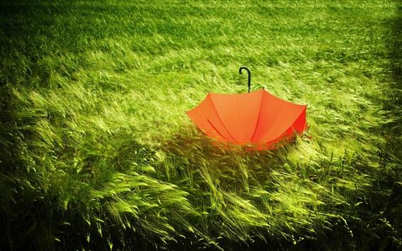 Wallpaper Red umbrella in the grass