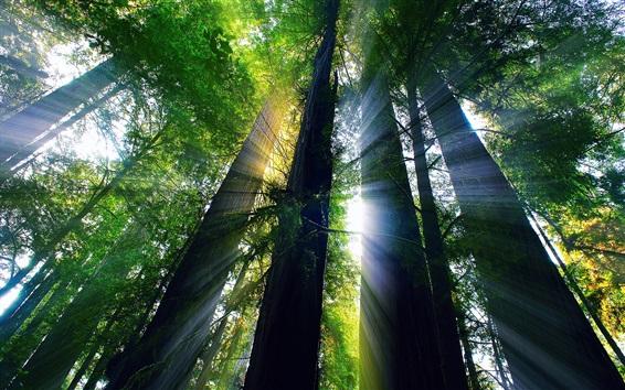 Fond d'écran Bois rouge, arbres, lumière du soleil