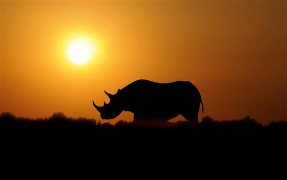 Wallpaper Rhinoceros at sunset
