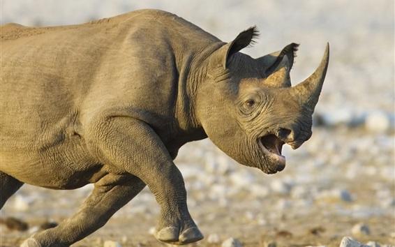 Papéis de Parede Rinoceronte