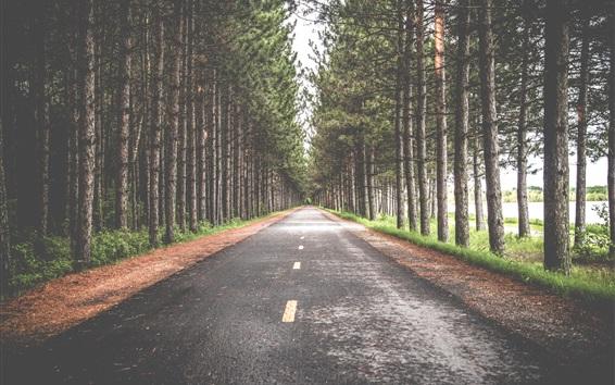 배경 화면 도로, 나무
