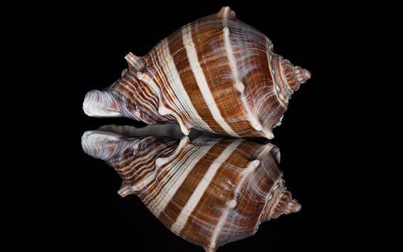 Wallpaper Shell macro photography, black background, mirror
