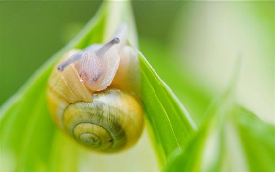 배경 화면 달팽이 매크로 촬영, 녹색 잎