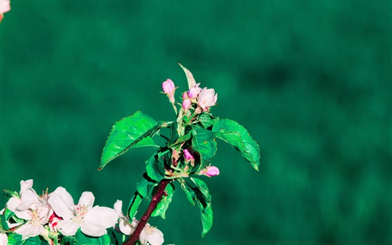 Papéis de Parede Primavera, flores, galhos