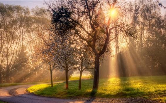 Wallpaper Spring, trees, flowers, grass, sun rays