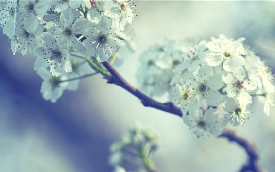Wallpaper Spring, white flowers, twigs, bokeh