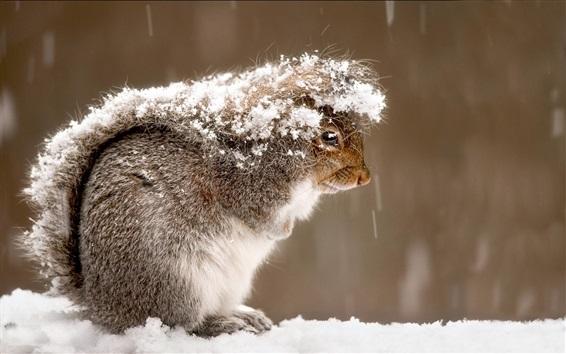 Papéis de Parede Esquilo, neve, inverno