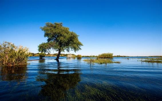 Wallpaper Summer, tree, grass, lake, clear water