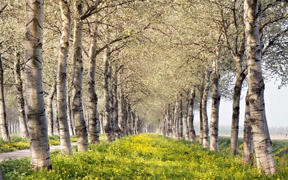 Обои Лето, деревья, цветы