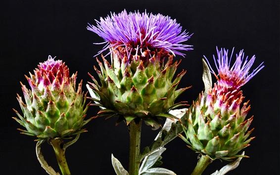 Papéis de Parede Thistle flores roxas, florescimento, orvalho