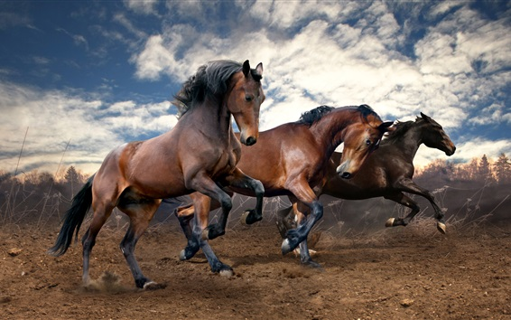 Wallpaper Three brown horses run