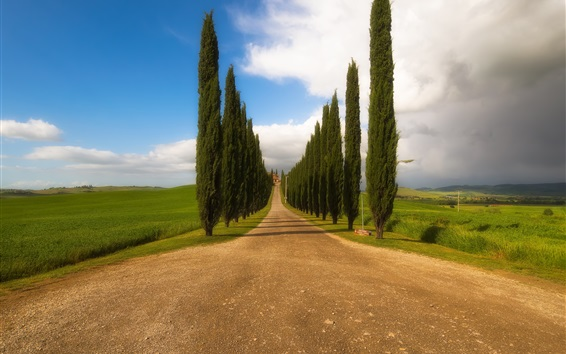 Fond d'écran Toscana, Italie, arbres, route