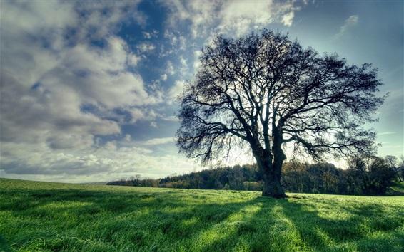 Wallpaper Tree, green grass, shadow, sun rays