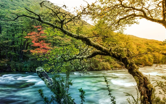 Wallpaper Trees, branches, moss, river, autumn