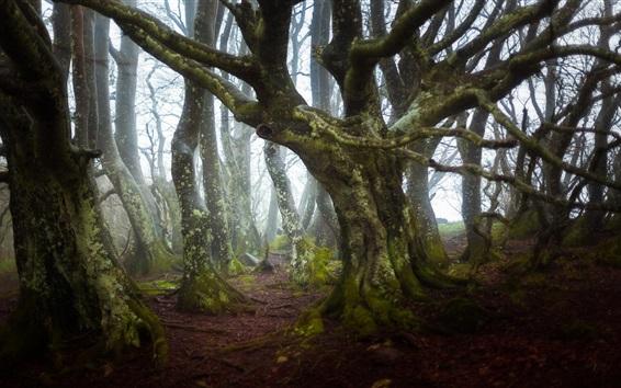 Fondos de pantalla Árboles, bosque, niebla, mañana